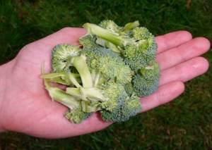 1 Cup of broccoli